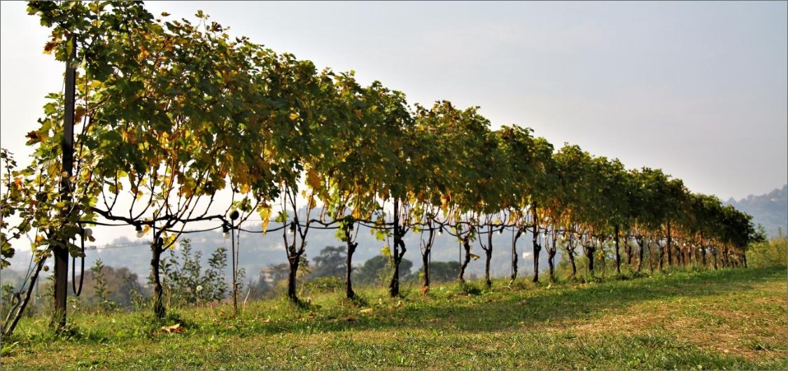 vigne-bergamo